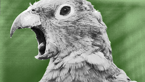 green_parrot_merge_1