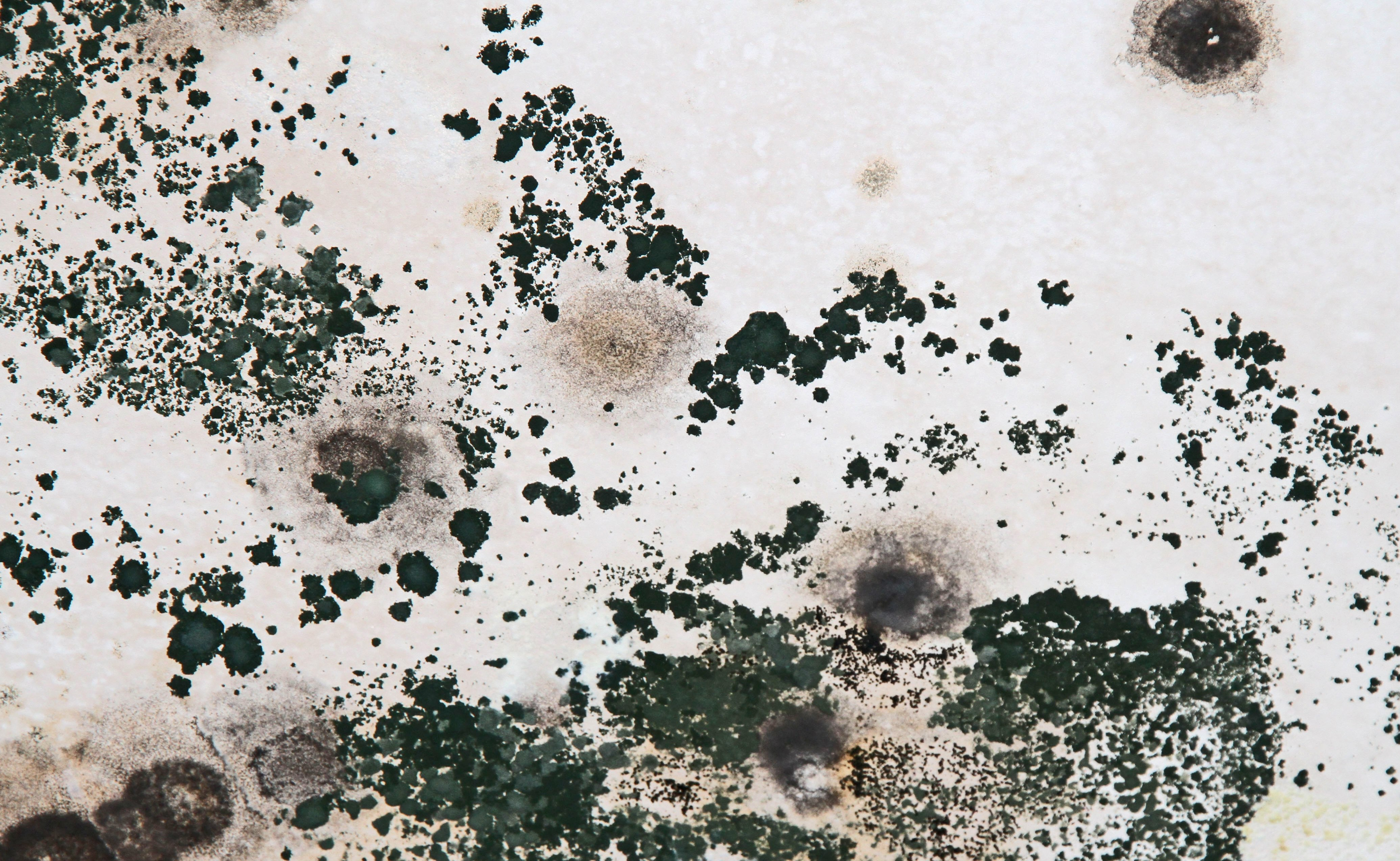How to identify black mold - Image