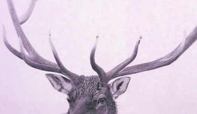 moose_purple_image